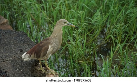 heron beak bird sitting near a field.