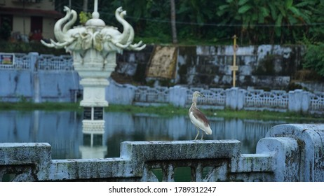 heron beak bird is sitting near elephant statue at Jagannatha temple Thalassery Kerala