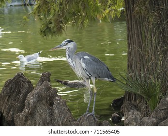 Heron bird resting after a meal