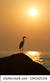 Heron bird watching sunset over sea