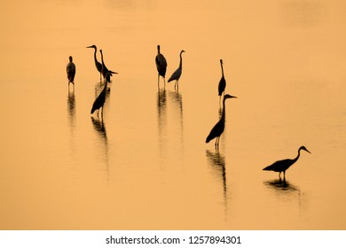 Heron birds silhouettes with reflections in the lake in Bundala national park. Selective focus