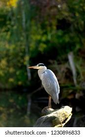 a heron can wait
