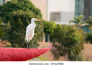Heron in the city