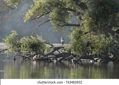 A Heron during a boat trip through the nature reserve de Biesbosch in Netherlands.