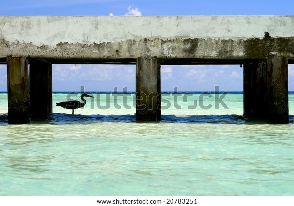 A Heron fishes under a Jetty