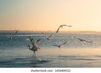 Heron at lake in south america, brazil, imbé