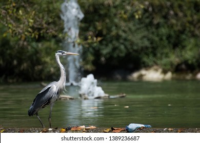 Heron next to a fountain and a plastic bottle