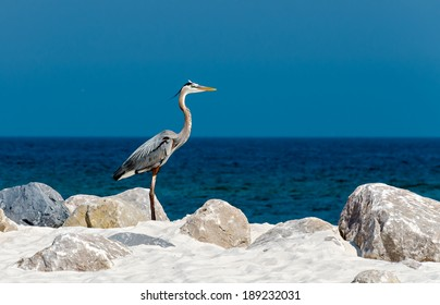A Heron on the Alabama gulf coast.