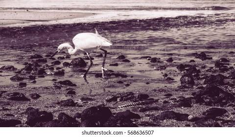 Heron on the beach fishing