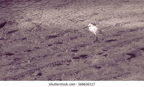 Heron on the beach on the sand