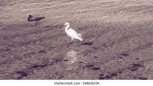 Heron on the beach sunrise