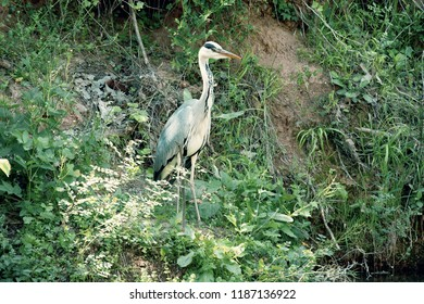 a heron on a hill by the river in nature