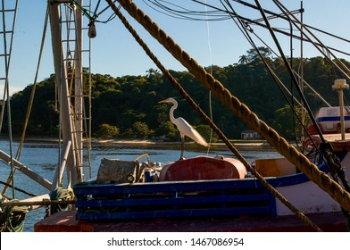 Heron on a motor boat at the pier. Guanabara Bay. Brazil.