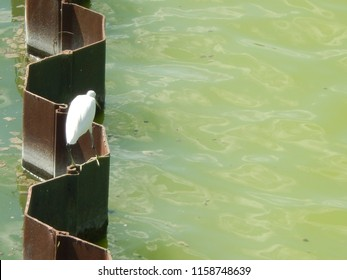 heron on one leg on the green water or iron watershed on town with copy space
