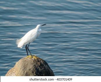 heron on the sea