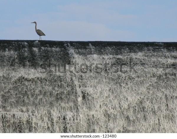 Heron on top of waterfall