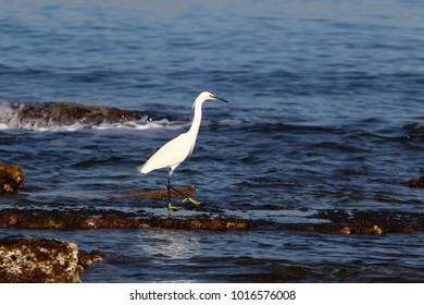 Heron sits on the shores of the Mediterranean Sea and catches small fish