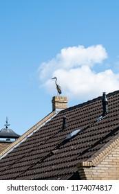 Heron sitting on chimney on rooftop