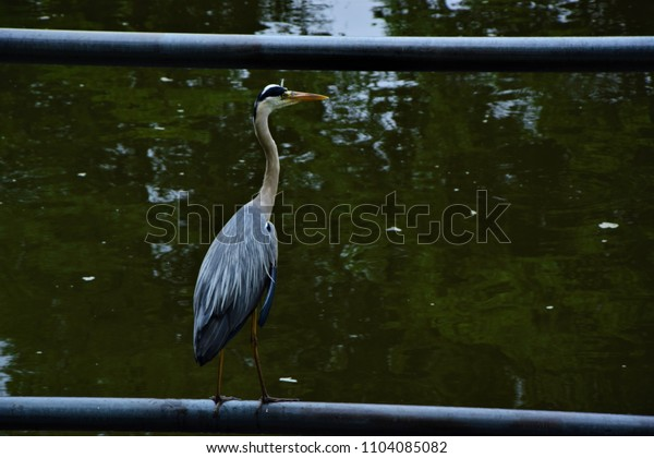 heron standing on the barrier