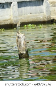 Heron standing on a wooden post