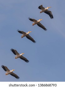 herons bird wildlife flying view
