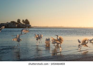 Herons flying at sunset in Imbé, South Brazil Region.