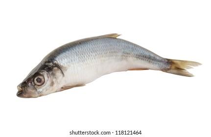Herring fish isolated on white background
