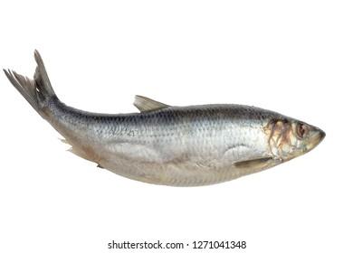 Herring fish isolated on white background.