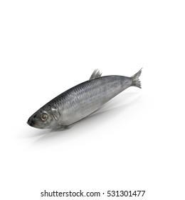 Herring fish isolated on white. 3D illustration