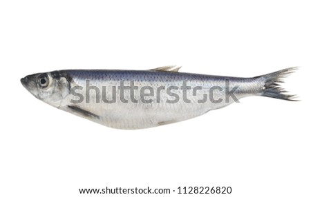 herring-fish-isolated-on-white-450w-1128