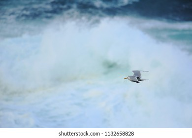 Herring gull over the waves
