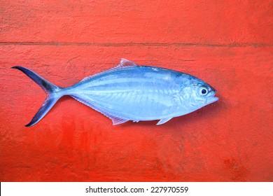 Herring scad , Alepes vari,fish on red wood floor of fishery boat