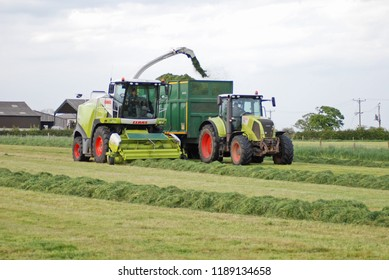 Hessay York June 4th 2016 grass which will be made in to grass silage to feed dairy cows, being collected with a Forage harvester.