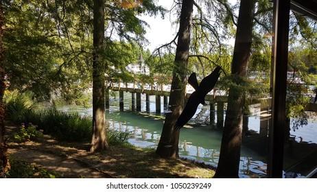 Heviz. Hungary. Europe. Thermal lake Heviz. Summer.