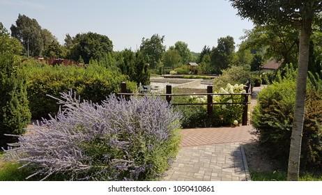 Heviz. Hungary. Europe. Thermal lake Heviz. Park. Summer.