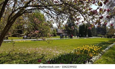 Heviz. Hungary. Thermal lake. Therapy. Spring.