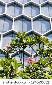Hexagonal pattern on building facade with pink frangipani in front