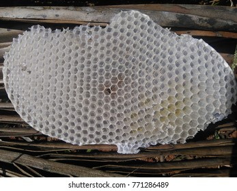 Hexagonal shapes of empty honeycomb