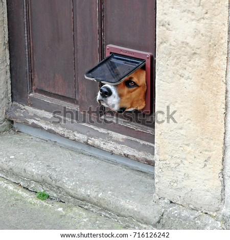 Hey Down There Dogs Head Stuck Stock Photo Edit Now 716126242
