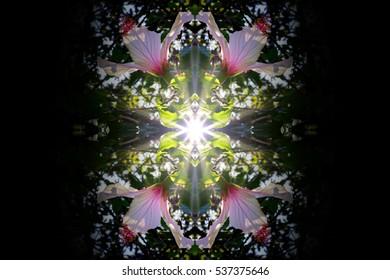Hibisco kaleidoscope