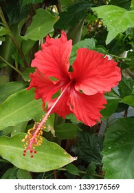 hibiscus flower beautiful flower