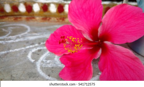 Haiti National Flower Images Stock Photos Vectors Shutterstock