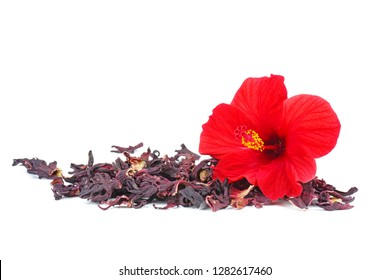 Hibiscus flower and dry blossom isolated on white background