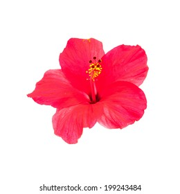 Hibiscus Flowers isolated on white