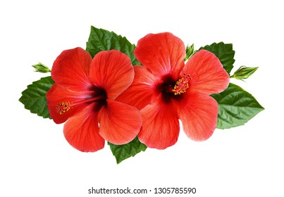 Hibiscus flowers in tropical arrangement isolated on white. Top view.