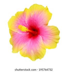 Hibiscus on white background