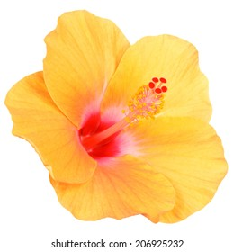 Hibiscus on white background with clipping path