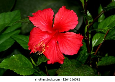 Hibiscus Painted Flower Stock Photos Images Photography
