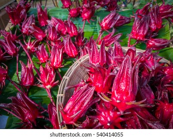 Hibiscus sabdariffa or Roselle fresh , Healthy Food Alternative Medicine Drinks.