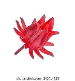 Hibiscus sabdariffa or roselle fruits isolated on white background